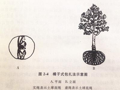 树木土球包扎的三种方法