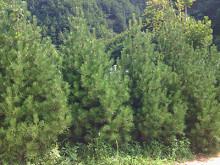 陕西部署国土绿化和森林防火工作
