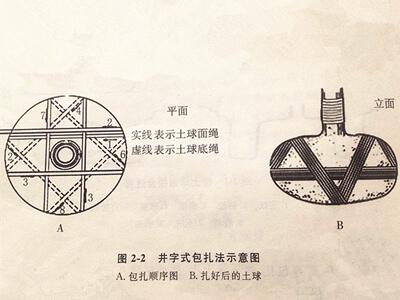 白皮松土球包扎的三种方法