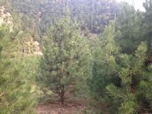 至2020年期间我国将每年完成造林任务1亿亩。