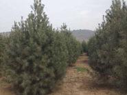 冬季是苗圃病虫害防治的好时机!