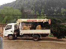 7棵4.5米白皮松发往郑州