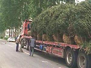 """白皮松种植基地:绿化苗木行业还能""""火""""多久?"""