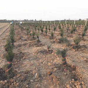 园林苗木的土壤管理