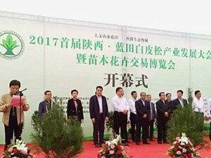 蓝田县召开首届陕西白皮松产业发展暨苗木花卉交易博览