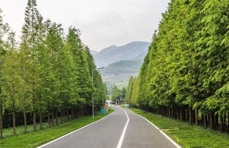 2018年全国乡村绿化美化成为新热点