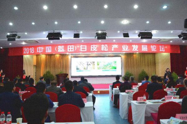 2018白皮松产业发展论坛 1