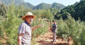 如何规范种植陕西白皮松?