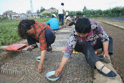 白皮松营养袋苗裝植 2