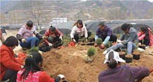 白皮松种植基地:病害的品种及病原品种