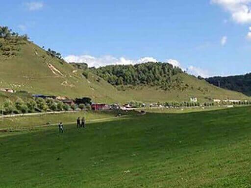 白皮松等苗木为宝鸡关山牧场旅游线路再添绿色