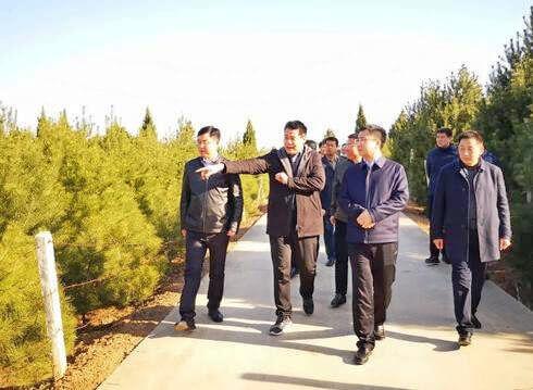 县委副书记徐毅调研蓝田白皮松产业发展